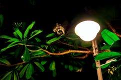 Begrepp av den varma tropiska natten Den glödande lyktan exponerar sidorna av tropiska växter på natten Royaltyfria Bilder