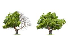 Begrepp av doubleness Dött träd på en sida och bosatt träd på den olika sidan royaltyfri fotografi