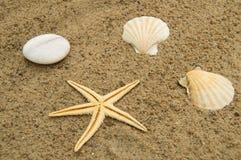Begrepp av en ferie och resa för strand Sjöstjärna skal på den sandiga stranden Royaltyfria Bilder