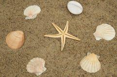 Begrepp av en ferie och resa för strand Sjöstjärna skal på den sandiga stranden Royaltyfri Fotografi