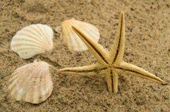 Begrepp av en ferie och resa för strand Sjöstjärna skal på den sandiga stranden Arkivbild