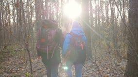 Begrepp av fotvandra och naturloppet Unga par av fotvandrare i skog på höst lager videofilmer