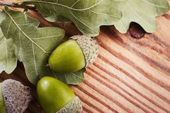 Begrepp av gröna eksidor och ekollonar på bakgrunden ett lantligt texturerat trä Kopieringsutrymme, bästa sikt Arkivfoto