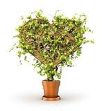 Begrepp av hälsa Växten i form av hjärta royaltyfri illustrationer