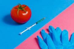 Begrepp av Icke-naturliga produkter, Gmo Injektionsspruta, blåa handskar och röd tomat på rosa färger och blåttbakgrund, Royaltyfri Foto