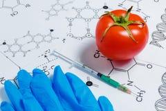 Begrepp av Icke-naturliga produkter, Gmo Injektionsspruta, blåa handskar och röd tomat på vit bakgrund med kemisk formel, Royaltyfria Foton