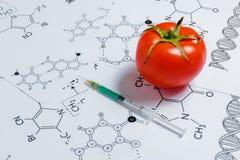 Begrepp av Icke-naturliga produkter, Gmo Injektionsspruta och röd tomat på vit bakgrund med kemisk formel, Royaltyfria Foton