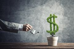 Begrepp av investeringinkomst och tillväxt med pengarträdet i kruka Arkivbild