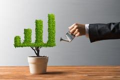 Begrepp av investeringinkomst och tillväxt med trädet i kruka arkivbilder