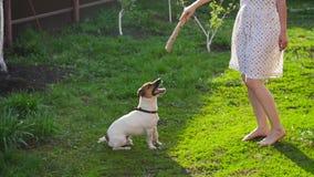 Begrepp av kamratskap och husdjur Lycklig ung kvinna och hund som har gyckel på gräs stock video