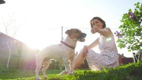 Begrepp av kamratskap och husdjur Lycklig ung kvinna och hund som har gyckel p? gr?s lager videofilmer