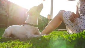 Begrepp av kamratskap och husdjur Lycklig ung kvinna och hund som har gyckel p? gr?s stock video