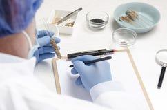 Begrepp av laboraty och testa nytt frö Man som en yrkesmässig laborant som arbetar med olika sorter av frö och wrien royaltyfri bild