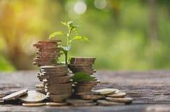 Begrepp av pengarträdet som växer från pengar Finansiellt och besparing Arkivbilder