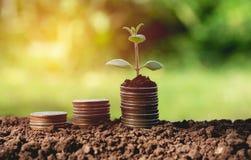Begrepp av pengarträdet som växer från pengar Finansiellt och besparing Arkivfoton