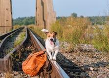 Begrepp av resanden med ett husdjur: hund som balanserar på drevspårstången Royaltyfri Foto