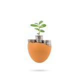 Begrepp av tillväxt för nya pengar Arkivbilder