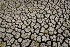 Begrepp av varm och torr klimatet det global uppvärmning, ändringsklimat, land för perenna skördar royaltyfri fotografi