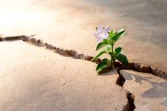 Begrepp för övre spricka för växtgolv växande Arkivbilder