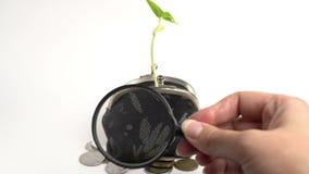Begrepp för bank för finans för pengaraffär, handväska med den växande växten, pengarträdtillväxt, guld- mynt lager videofilmer
