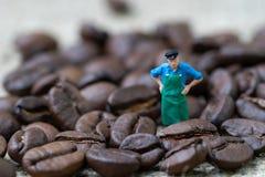 Begrepp för expert eller för professionell för affär för kaffebönor, miniatyr arkivbild