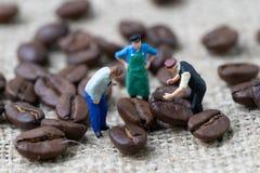 Begrepp för expert eller för professionell för affär för kaffebönor, miniatyr arkivbilder