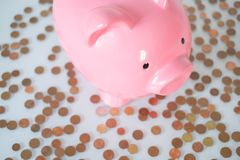 Begrepp för finans för besparing för spargrispengar Piggy packa ihop isolerat på vitbakgrund Arkivbild
