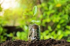 Begrepp för finansiell investering ett fullt mynt, trädet växer arkivbild