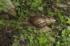 Begrepp för långsam för gräs för snigelkula jordnatur för closeup Royaltyfria Foton
