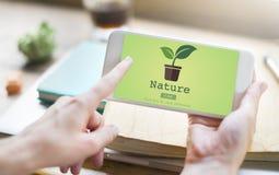 Begrepp för miljövård för naturväxtekologi arkivfoton