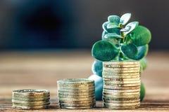 Begrepp för pengartillväxt Finansiellt tillväxtbegrepp med buntar av guld- mynt och pengarträdet (crassulaväxten) Fotografering för Bildbyråer
