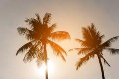 Begrepp för sommar för kokosnötpalmträdstrand arkivfoto