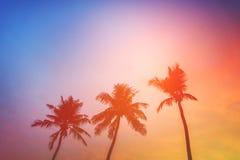 Begrepp för sommar för kokosnötpalmträdstrand royaltyfri foto