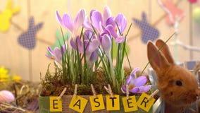 Begrepp för symbol för fluffig kanineaster beröm traditionellt nära blomkrukan
