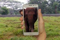 Begrepp för turism i zoo, afrikan, asiatiskt land Royaltyfri Fotografi