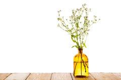 Begrepp för växt- medicin - flaska med kamomill på trätabellen royaltyfria foton