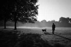 Begrepp: husdjur och ägare Flickan spelar och utbildar med hennes utomhus- near träd för hunden royaltyfria foton