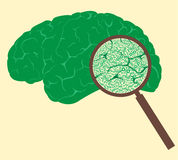 Begrepp med procentsatsfläcken och den mänskliga hjärnan Royaltyfri Bild