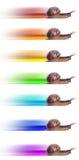 Begrepp. snabb snail med den kulöra silhouetten. fotografering för bildbyråer