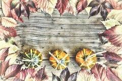 Begrepp: Tacksägelse Ram ljusa sidor, dekorativa pumpor, lekmanna- höstlägenhet Fritt avstånd för text Top beskådar Royaltyfria Foton