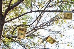 Begrepp Träd av drömmar var pengar växer Royaltyfria Bilder