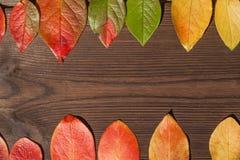 Begreppet av hösten Gula och röda höstsidor på en trätextural bakgrundsnärbild och som en ram för text royaltyfria foton