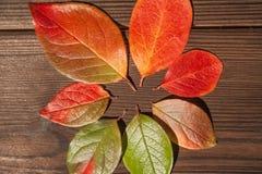 Begreppet av hösten Gula och röda höstsidor på en trätextural bakgrundsnärbild och som en ram för text royaltyfria bilder