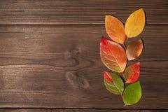 Begreppet av hösten Gula och röda höstsidor på en trätextural bakgrundsnärbild och som en ram för text arkivfoto