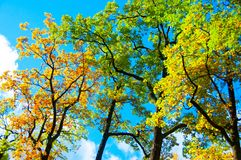 Begreppet av nedgången, vår, sommar - ljust foto med sidorna av träden royaltyfri fotografi