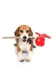 Begreppet för den förrymda hunden, husdjur semestrar hem eller det borttappade djuret fotografering för bildbyråer