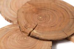 Begreppsdendrochronologyen synliga årliga cirklar för trädstammar klart, runda skivor av träd, vit bakgrund Arkivfoton