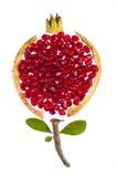 begreppsfotopomegranate Royaltyfri Foto