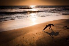 Begreppsidén av förföljer yoga arkivfoton