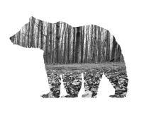Begreppskonst - exponeringsbjörn och torkad skog Arkivfoto